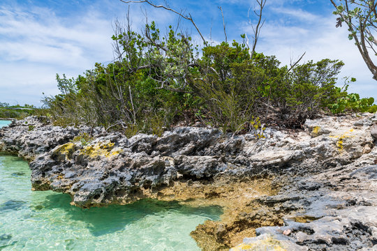 Tropical vegetation in Stock Island (Exuma, Bahamas).