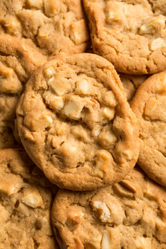 Fresh baked, Mouth watering macadamia nut cookies background. Sweet biscuits. Homemade sweetness