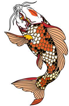 red white Japanese koi carp fish swimming up. Tattoo. Isolated vector illustration