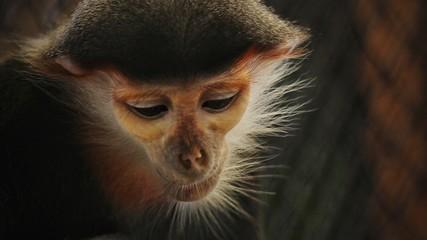 Fotorolgordijn Aap Close-up Of Monkey