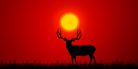 Foto op Canvas Rood traf. deer in the sunset. wildlife landscape concept.