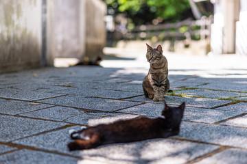 two feral cat in the street near Karatsu castle in Karatsu city, Japan
