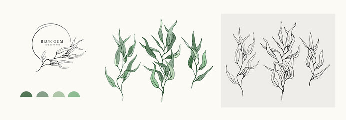 Eucalyptus blue gum logo and branch. Hand drawn wedding herb, plant and monogram with elegant leaves for invitation save the date card design. Botanical rustic trendy greenery