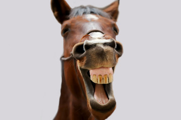 Young mare yawn in riding hall on a funny picture Papier Peint