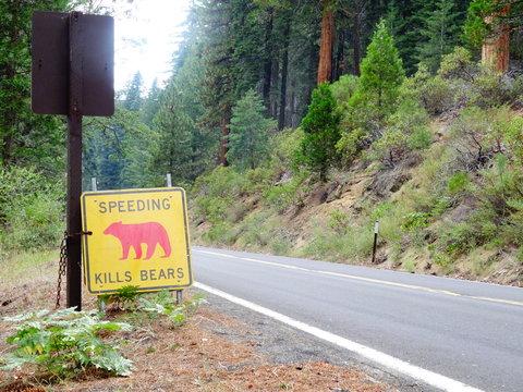 Animal Sign By Road At Yosemite National Park