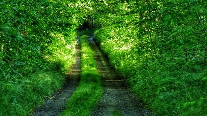 Keuken foto achterwand Weg in bos Narrow Pathway Along Trees In Forest