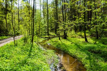 Rzeka strumień las drzewa
