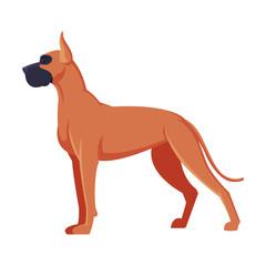 Obraz Great Dane Boxer Purebred Dog, Pet Animal, Side View Vector Illustration - fototapety do salonu