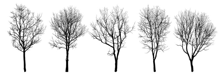Fototapeta .Winter trees silhouettes collection. Set of isolated vector design elements..  Hand drawn  illustration in sketch style.  Nature template. Clipart. obraz