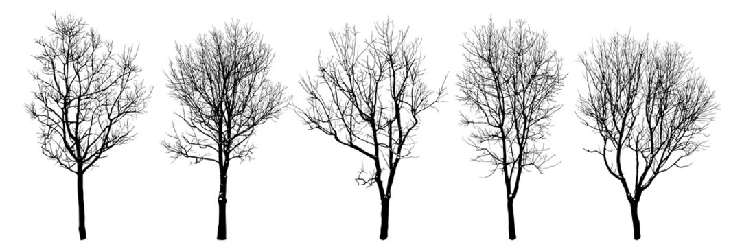 .Winter trees silhouettes collection. Set of isolated vector design elements..  Hand drawn  illustration in sketch style.  Nature template. Clipart.