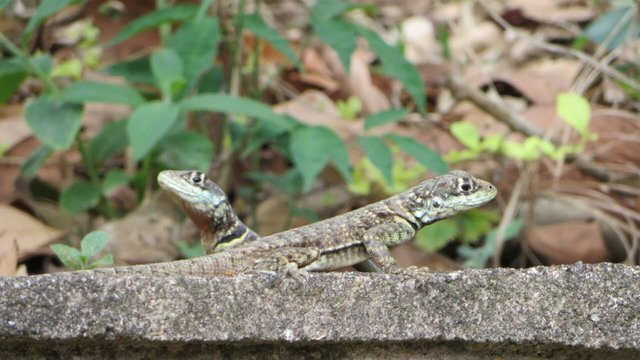 Close-up Of Lizards On Rock