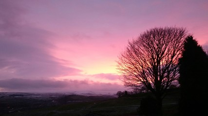Foto auf Gartenposter Aubergine lila Bare Trees On Landscape At Sunset