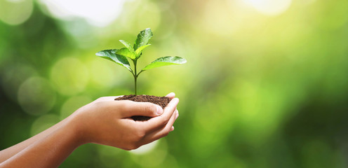 Wall Mural - hand holding young plant on blur green leaf background. environment concept