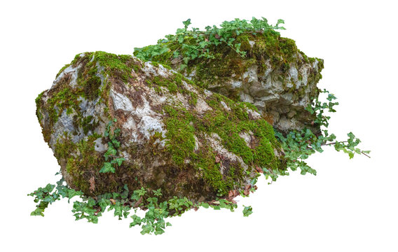 Cut out mossy rocks. Ancient boulder with moss isolated on white background. Large stone covered by ivy.