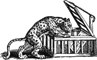 Sneaky Circus Tiger, Vector Sketch of a 19th century engraving