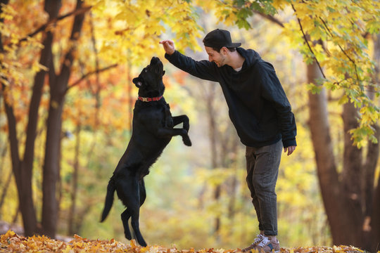guy with his dog labrador in autumn sunny park