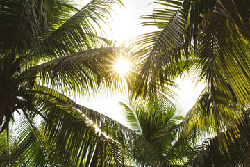 tropical leaves in the rays of light at sunset