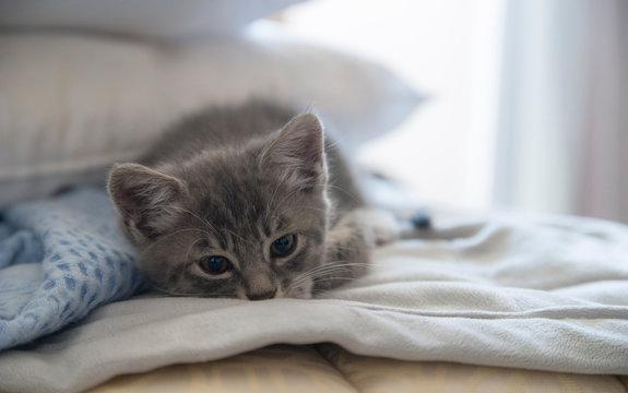 아기고양이 침대 낮잠