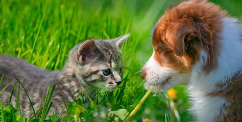 cute little kitten and puppy in the garden grass