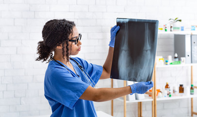 Female radiologist holding animal xray in veterinarian clinic. Panorama
