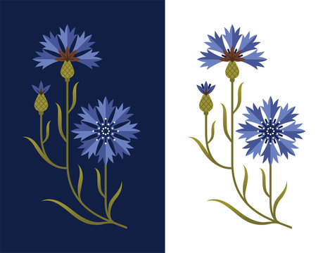 Stylized cornflower illustration