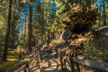Wall Mural - Hiking Trail In Sequoia National Park.