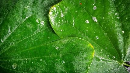 Fototapeta Full Frame Shot Of Wet Leaves obraz