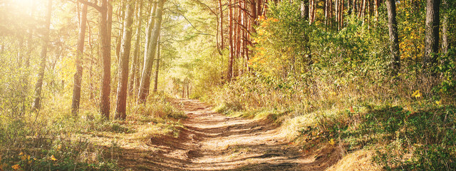 sandy pathway in autumn forest in morning time