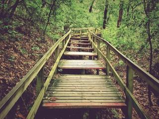 Obraz Footbridge In Forest - fototapety do salonu