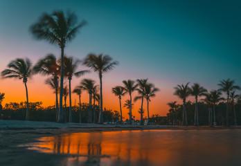 summer vacation palm trees beach water sunset silhouette tropical prints sea sun landscape nature sunrise blue orange eden paradise coconut tree