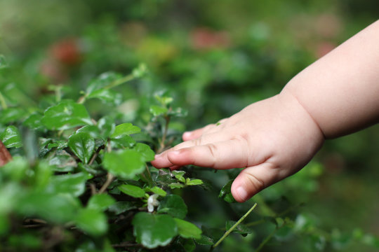 Baby hand reaching for tree leaves, sense of touching