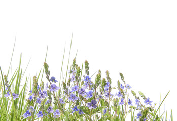 Border with herbs and wild flowers isolated on white background. Wild spring meadow blue flowers.. Fotobehang