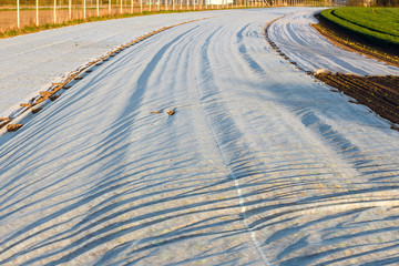freshly plowed field covered with agrotextile