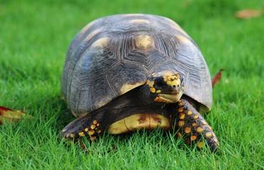 Close-up Of Tortoise On Grassy Field Wall mural