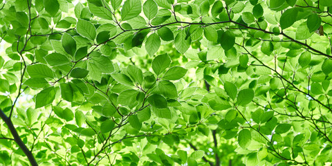 Close up of green spring leaves. Nature background