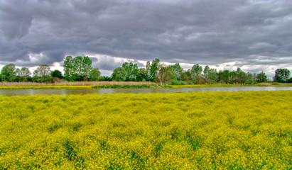 Panorama et paysage de campagne au bord de l'eau.