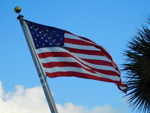 United Stater's Flag,4th of July,flower,landscape