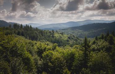 Widok na bieszczadzkie lasy z wieży widokowej w okolicy Cisnej.