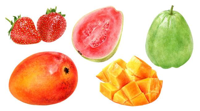 Guava mango strawberry watercolor illustration isolated on white background