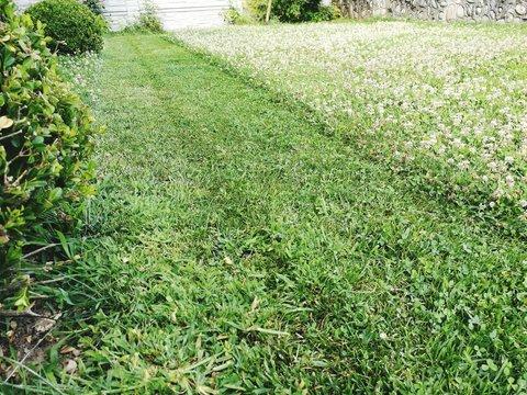Surface Level Of Grassland