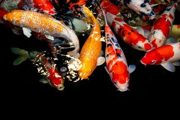 The many carp