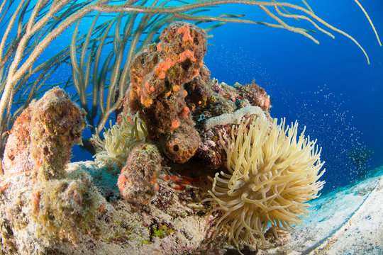 Corais Marinhos no caribe