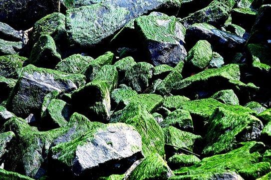Pile Of Mossy Rocks