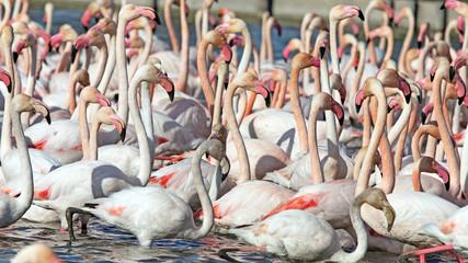Stores à enrouleur Flamingo Groupe de flamants roses