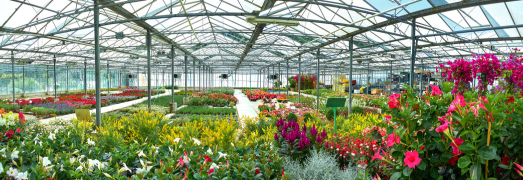 panoramic glass house with flowers and palnts