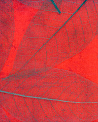 Wall Mural - skeleton of transparent red leaves