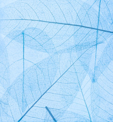 Wall Mural - skeleton of transparent blue leaves