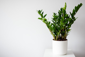 plant in pot over white wall background with copy space