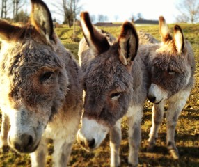 Close-up Of Donkeys On Landscape