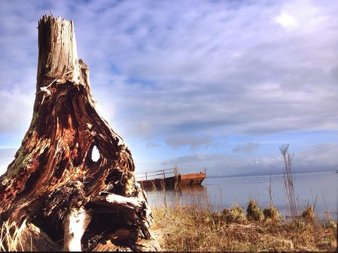 Tree Stump And Lake Against Cloudy Sky